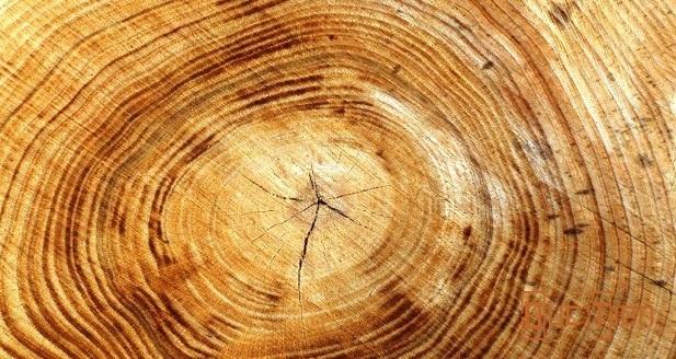 đặc điểm của vân gỗ